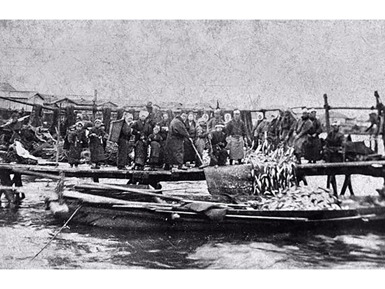 画像:小樽のニシン