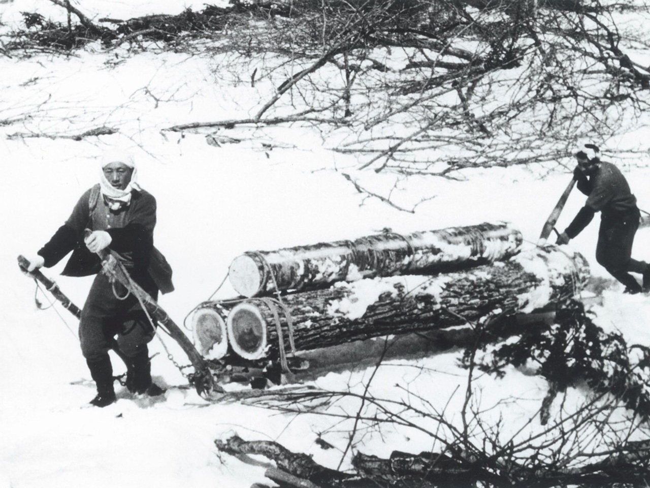 画像:三笠の林業